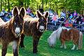 Im Wildpark Bad Mergentheim genießen auch die Nutztiere großes Interesse beim begeisterten Publikum. 06.jpg