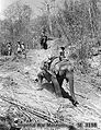 Indian forestry company use elephants.jpg