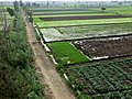 Irrigated fields near Kafr el Sheikh.jpg