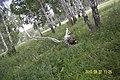 Iskitimsky District, Novosibirsk Oblast, Russia - panoramio (4).jpg