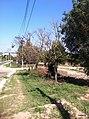 Itupeva - SP - panoramio (1043).jpg