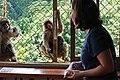 Iwatayama Monkey Park (3811295526).jpg
