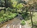 Izumi river in Shimogamo jinja shrine 20200405.jpg