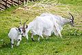 Jämtget Skånes djurpark 02.jpg