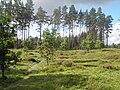 Järnåldersgravfältet i Stenehed 2.JPG