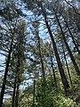 Jabal Moussa Biosphere Reserve 02.jpg