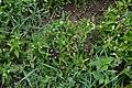 Jardim Botânico da Madeira DSC 0330 (14513284908).jpg
