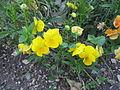 Jardin botanique Dijon 042.jpg