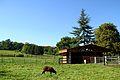 Jardin botanique Geneva sheeps.jpg