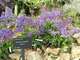 Jardinbotanique22.JPG