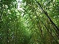 Jardins du Monde (Royan) - panoramio (2).jpg