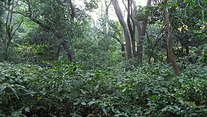 Jivdhan - Forest at the foot hills of the fort