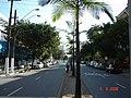 Jovens Palmeiras da Conselheiro - olhando para o norte - panoramio.jpg