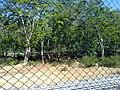 KURUMBAPATTI ZOOLOGICAL PARK, SALEM - panoramio (6).jpg