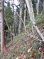 Kamishiro fault earthquake 3-2.jpg