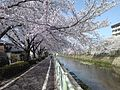 Kanaregawa 20110410 2.jpg