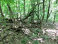 Kaniv Nature Reserve (May 2018) 22.jpg