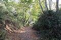 Kattoudhia-Mylikouri Nature Trail - panoramio (8).jpg