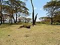 Kenya 2013. Lake Naivasha. - panoramio (10).jpg