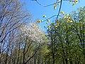 Khimselyshche, Cherkasy, Cherkas'ka oblast, Ukraine - panoramio (336).jpg