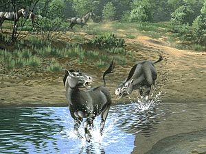Kalobatippus - Restoration of Kalobatippus from the late Oligocene of Oregon