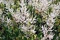 Kirstenbosch-021.jpg