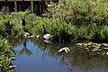 Kistenbosch National Botanical Garden - panoramio.jpg