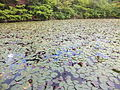 Kobe Municipal Arboretum in 2013-6-22 No,103.JPG