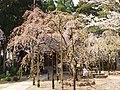 Kokubun-ji Temple-2 - panoramio.jpg