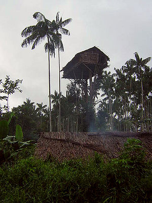 Kombai people - A Korowai treehouse, identical to Kombai treehouses. They are built high to offer protection against raids by enemy tribes.
