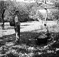 """Kotel za svinje na prostem, deček z """"banko"""" za vodo, pri Mešardu v Moravčah 1948.jpg"""