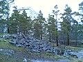 Kotikonnuntie - panoramio (13).jpg