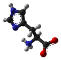 L-histidine-zwitterion-from-xtal-1993-3D-balls-A.png