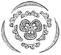 Lactoris fernandeziana Engler 1888 C.png