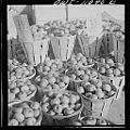 Lancaster County apples for sale 8d23461v.jpg