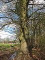 Landgoed Valkenberg DSCF2909.JPG