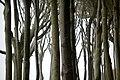 Landschaftsschutzgebiet Kühlung - Nienhäger Holz (Gespensterwald) (87).jpg