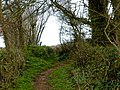 Lane near Cole Hill Plantation - geograph.org.uk - 149752.jpg