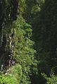 Laurissilva da Madeira 15.jpg