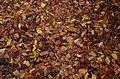 Leaves (8213977567).jpg