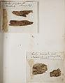 Lichenes Helvetici pars altera 004.jpg