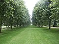 Lime avenue at Etal Manor - geograph.org.uk - 499598.jpg