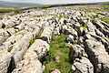 Limestone pavement east of Ingleborough (7633).jpg
