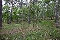 Linnés Hammarby - KMB - 16001000546975.jpg