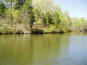 Coosa River - Typical Spring Time Shoreline On Lake Mitchell, Coosa River, 2006