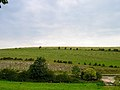 Long Hill, between Falmer and Lewes - geograph.org.uk - 51621.jpg