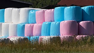 Long stack of pink white and blue silage bales.jpg