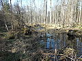 Lutownia River.JPG
