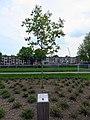 Maastricht OldHickoryplein (1).JPG