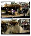 Madhya Pradesh, road 2015in03kjrh 159-029a (39579447935).png